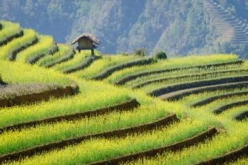 The pioneer in Tonkin Vietnam
