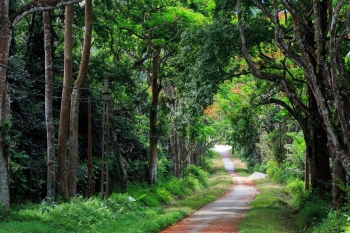Journey in Cucphuong national park